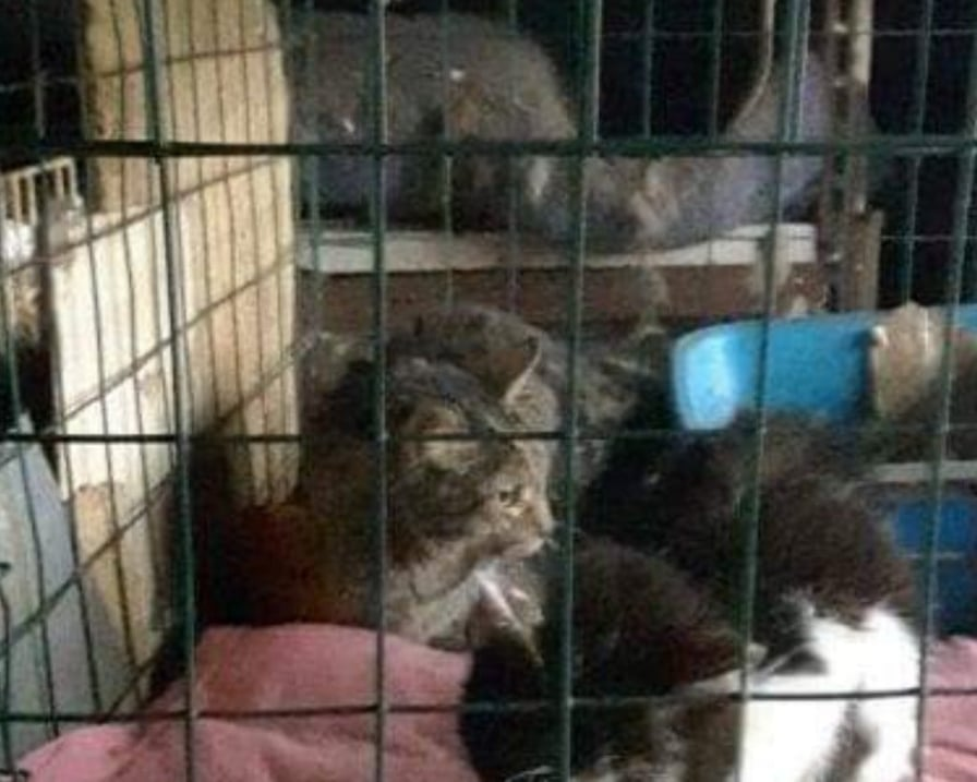 gattini portanti in salvo