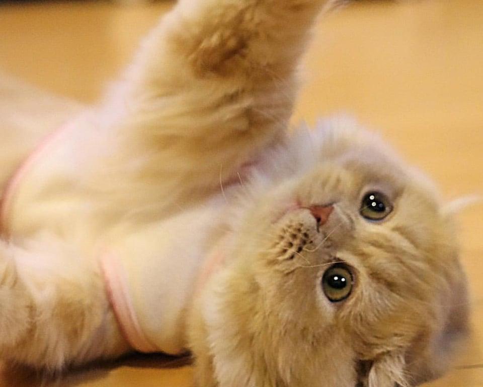 bell un bellissimo gatto