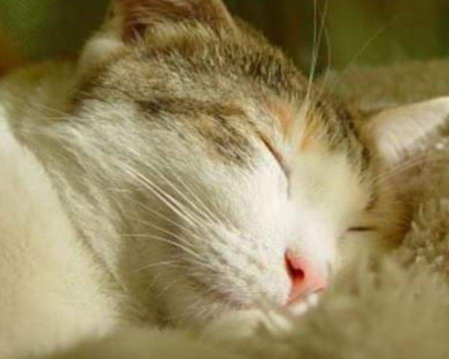 gatto dorme assorbe negatività