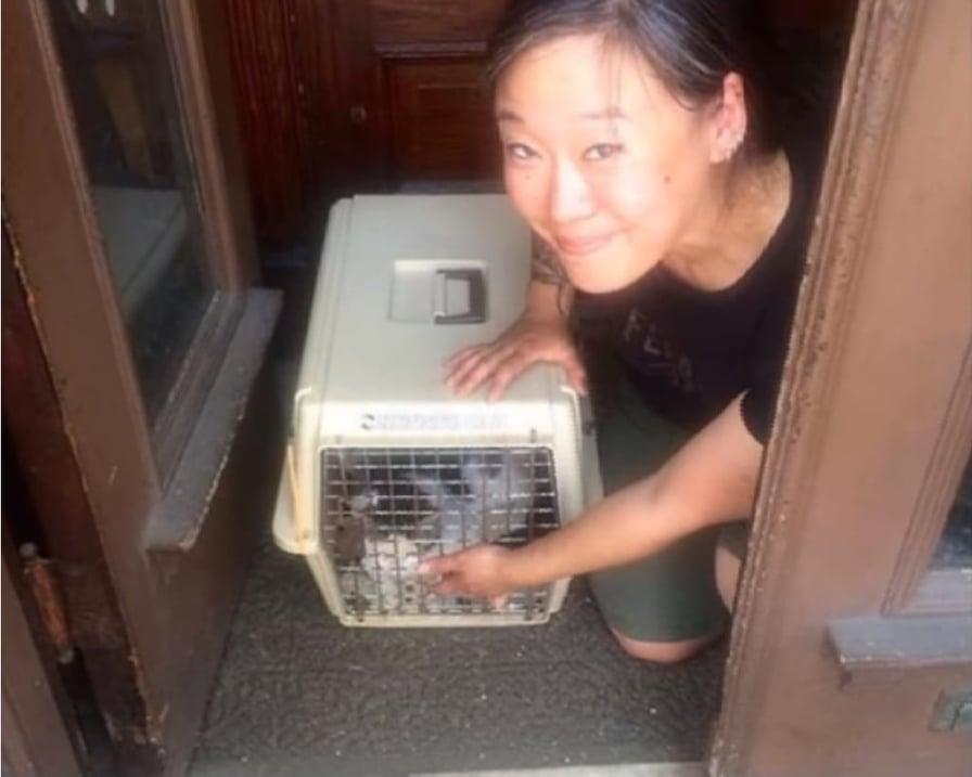 gattino catturato