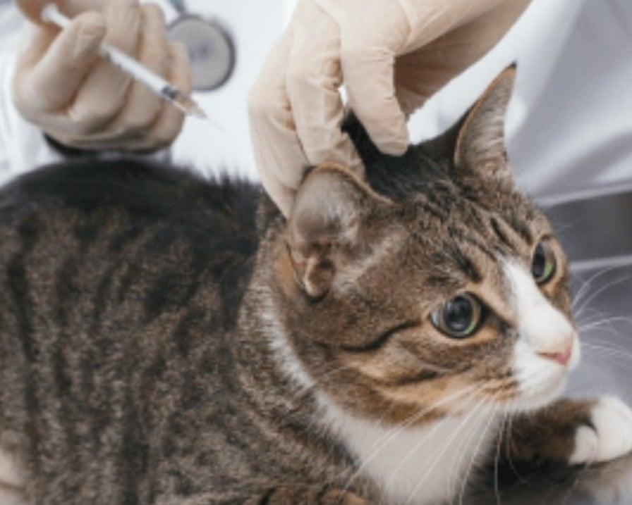 gattini-usati-come-cavie-poi-uccisi