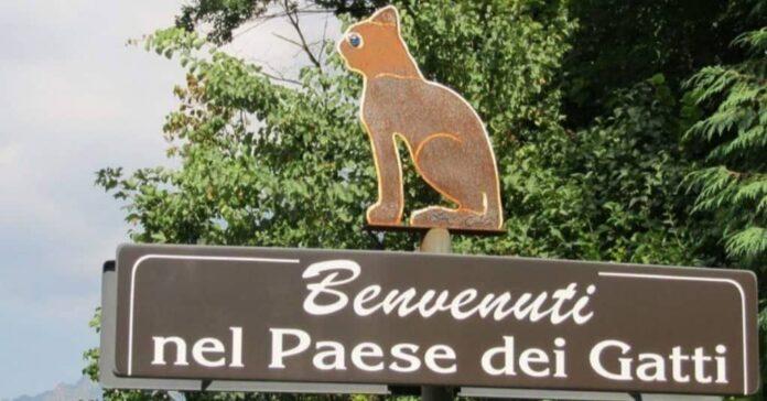 in italia il paese dei gatti