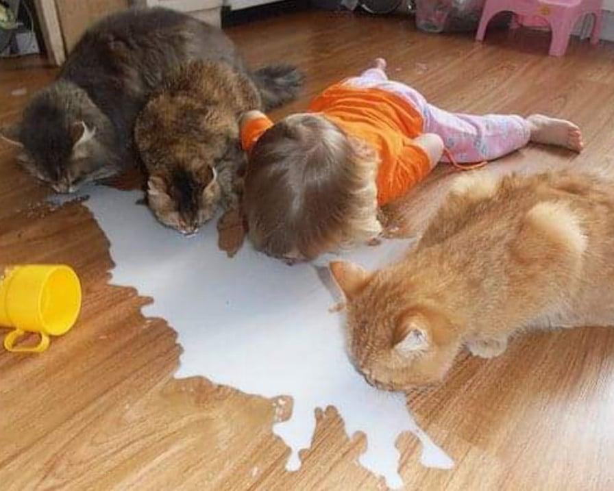 il-gatto-mangia-insieme-al-bambino