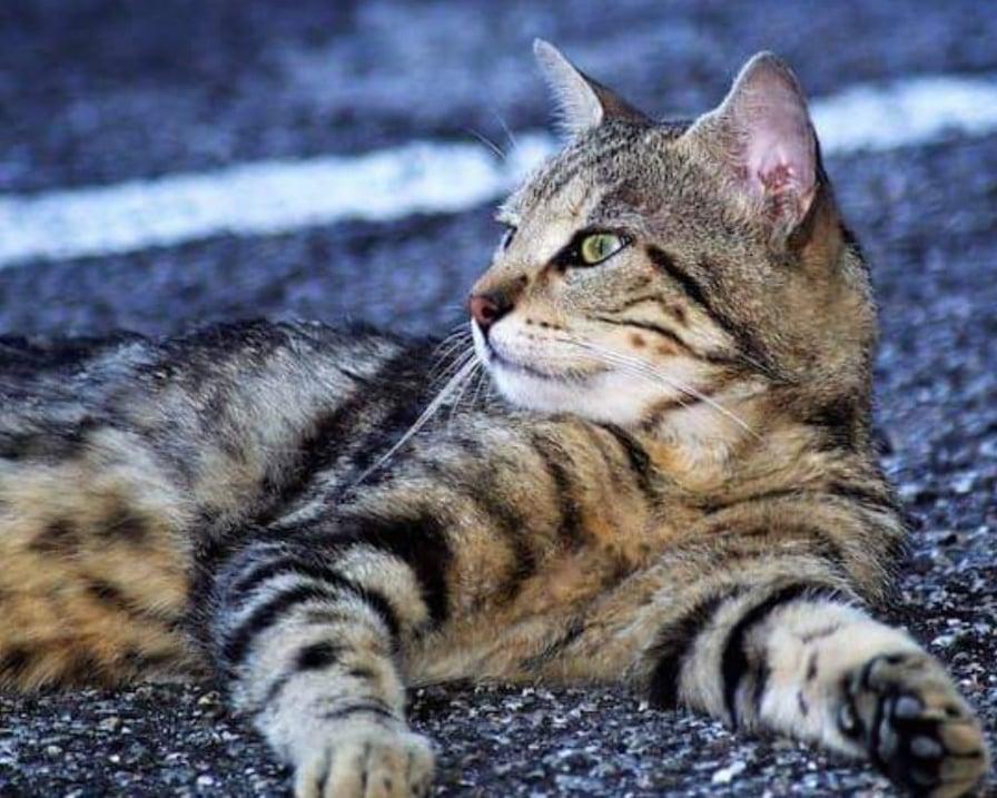 gatti nel degrado