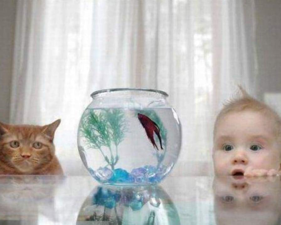 gatto e bambino crescere insieme