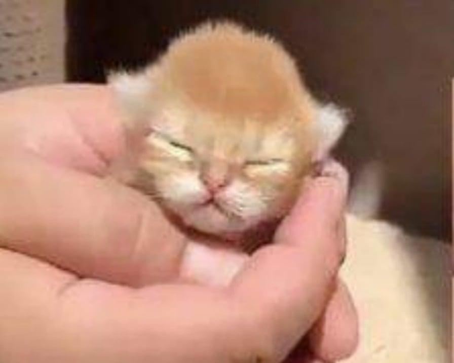 gattini-gettati-nel-cassonetto
