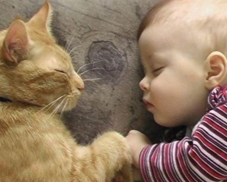 i gatti ci curano