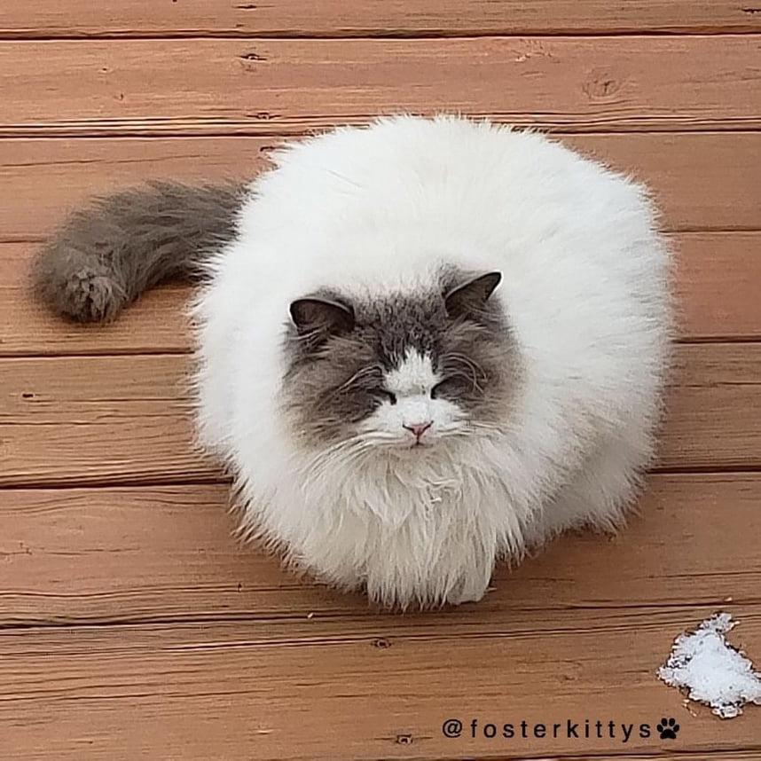il-gatto-abbandonato-a-se-stesso