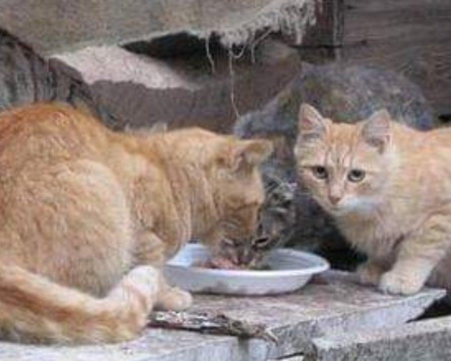 povero divideva cibo con gatti