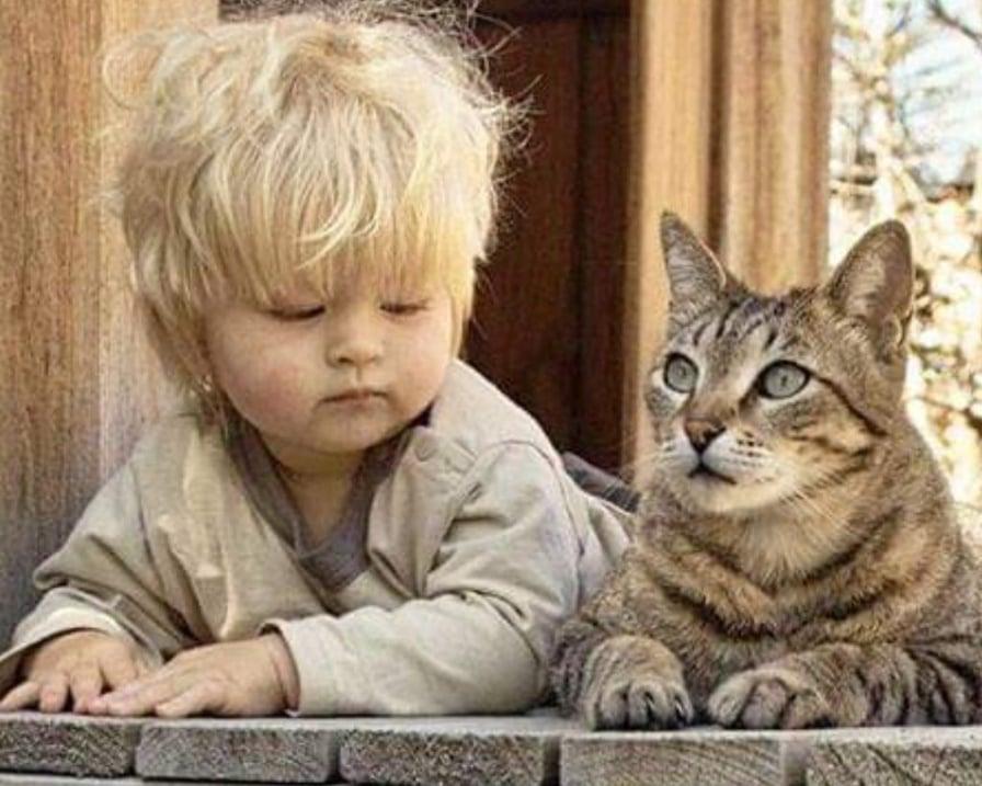 il-gatto-e-il-bambino-curiosi