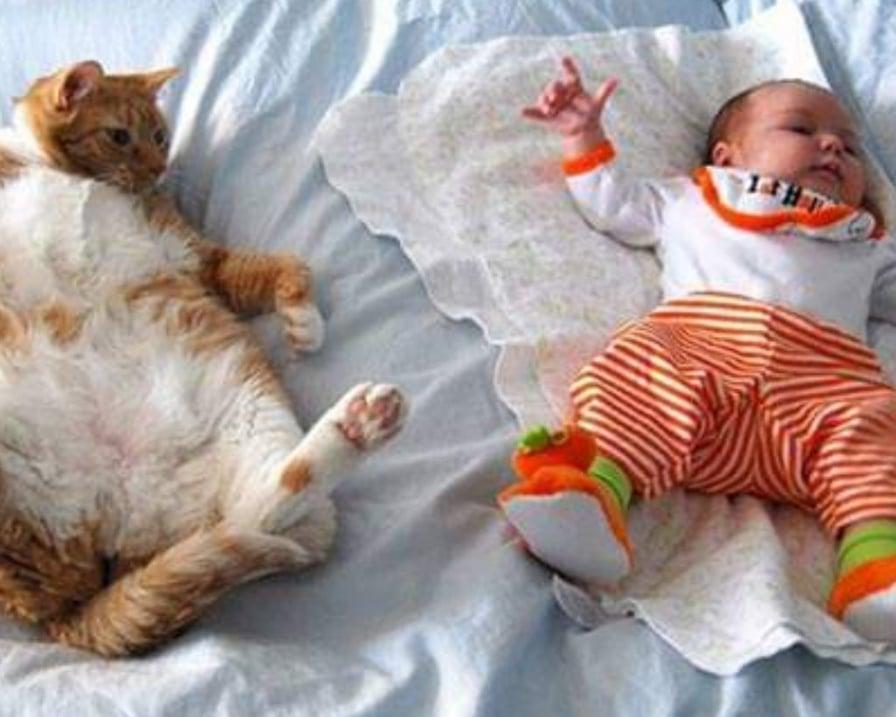 il-gatto-imita-il-bambino