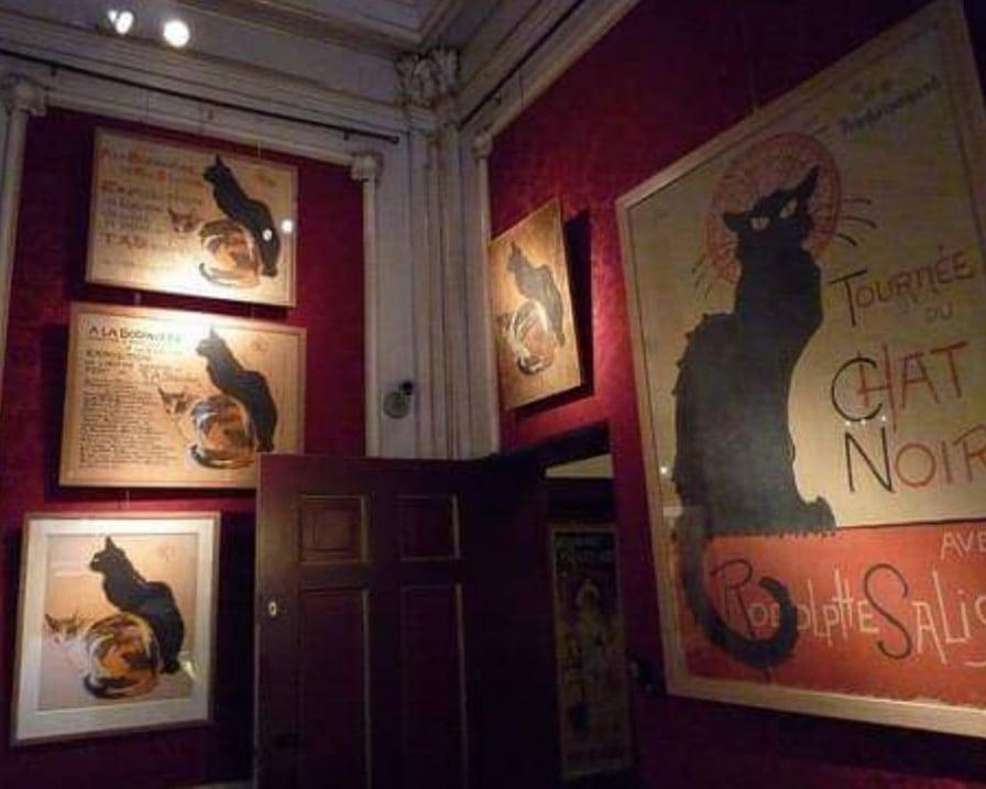gatti protagonisti del museo