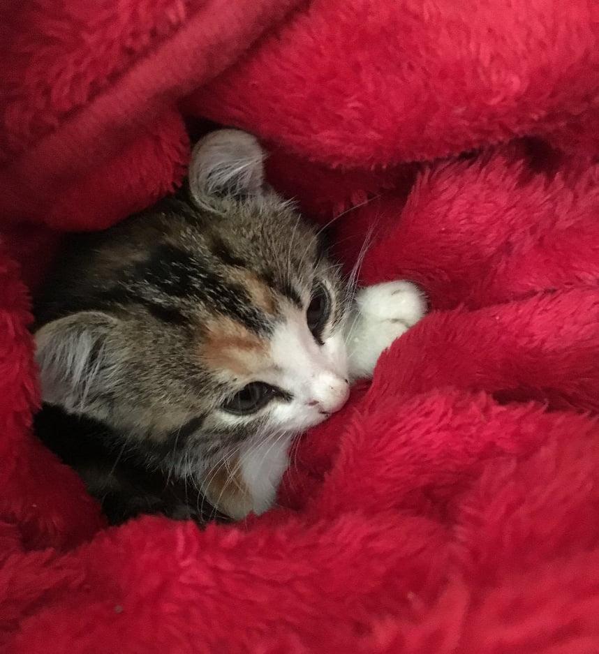 gattino-solo-lasciato-in-un-ripostiglio
