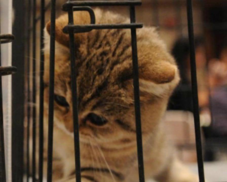 sperimentazione-test-sui cuccioli di gatto