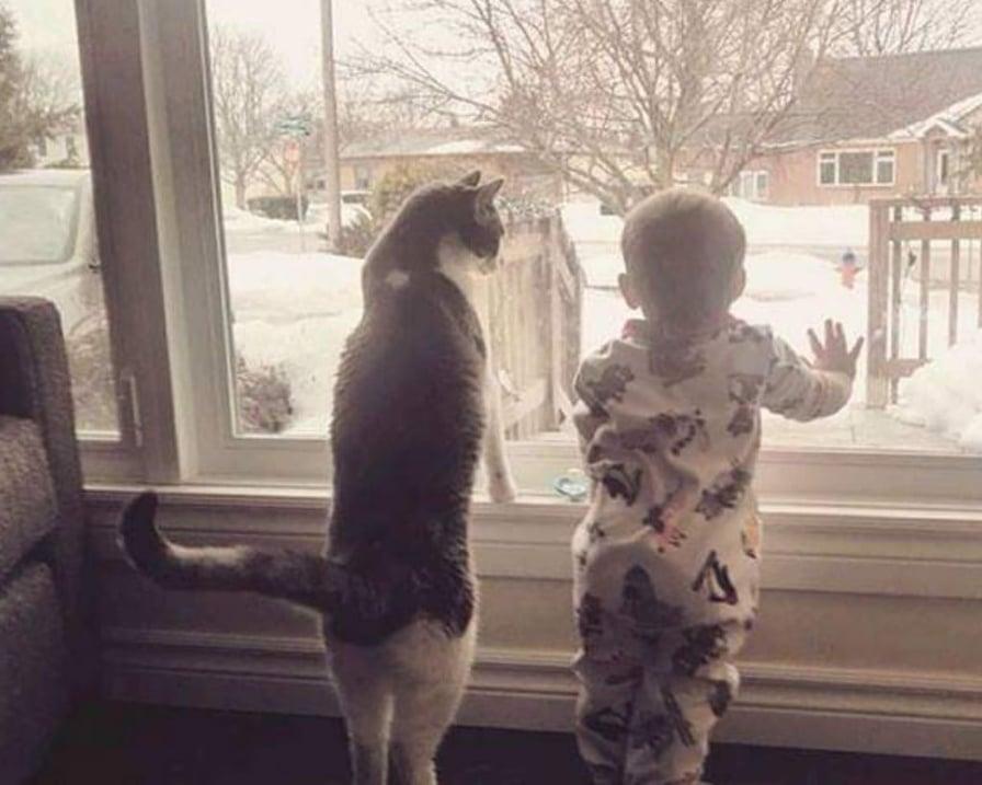 il-gatto-e-il-bambino-guardano-dalla-finestra