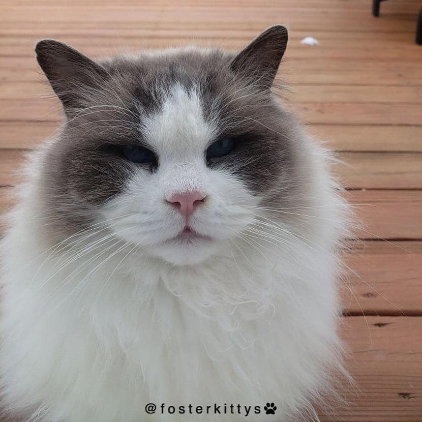 il-gatto-valentino-aspetta-una-famiglia