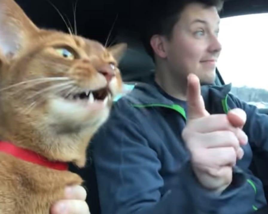 il-gatto-canta-con-i-suoi-padroni