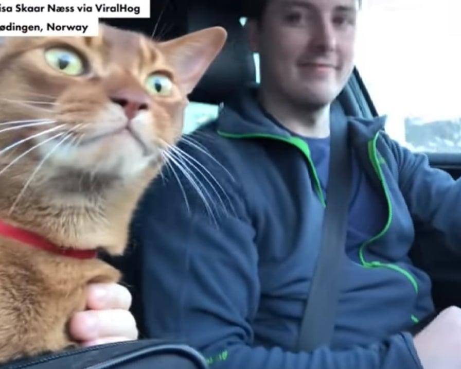il-gatto-canterino-in-macchina