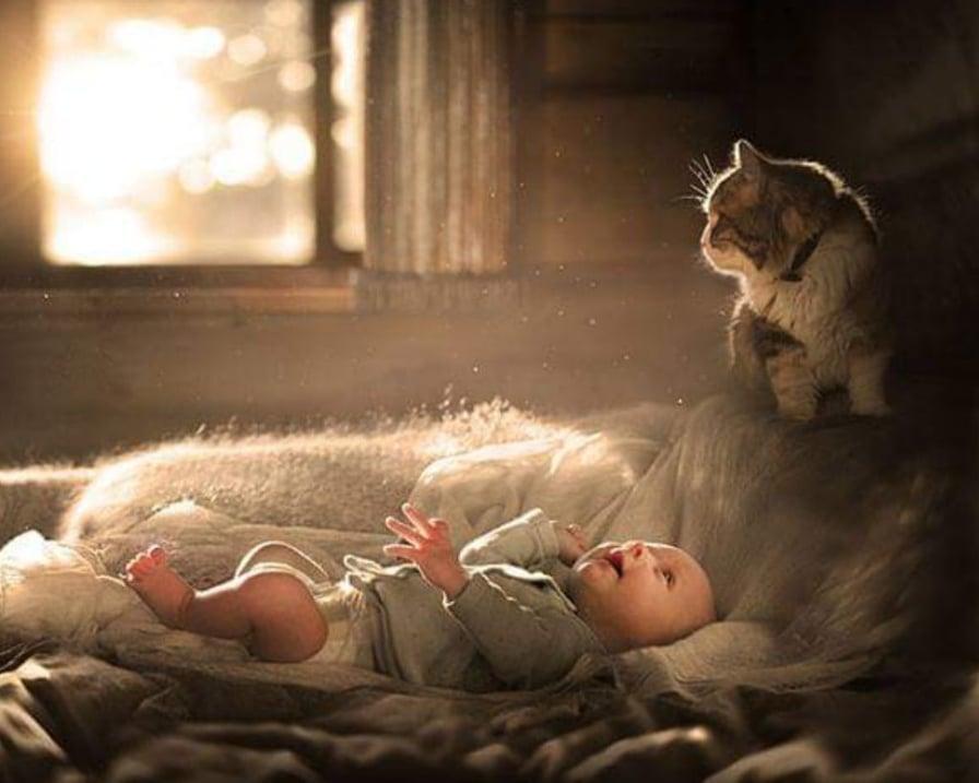 il-gatto-protegge-il-bambino