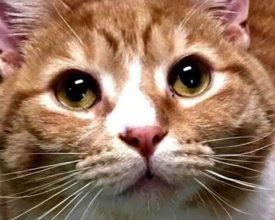 il-gatto-troppo-coccolone