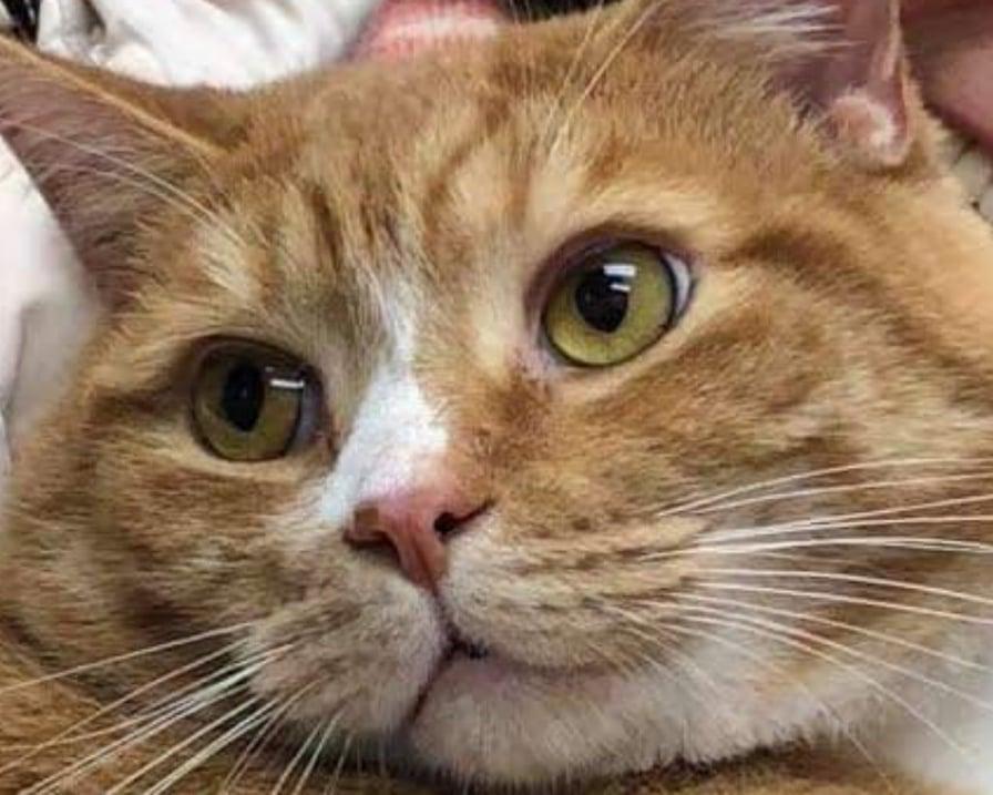 il-gatto-jacque-nessuno-lo-vuole