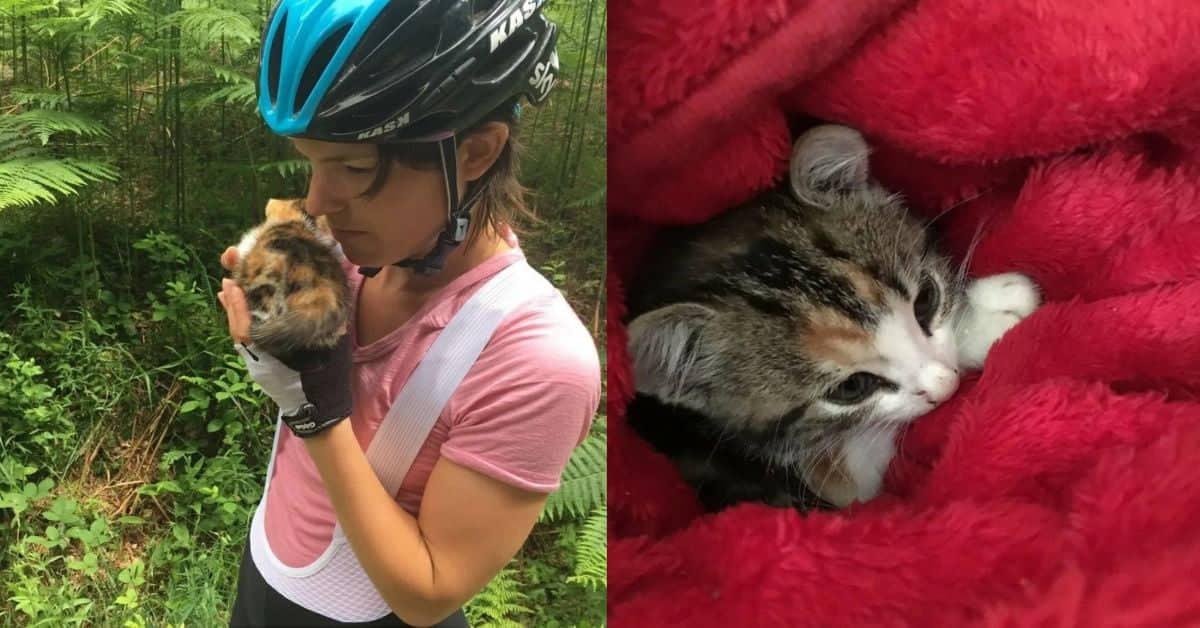 gattino-solo-trovato-da-ciclisti