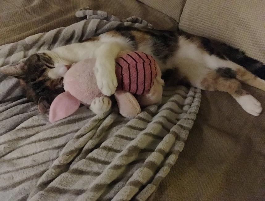 gattino-dolcissimo-non-piu-solo