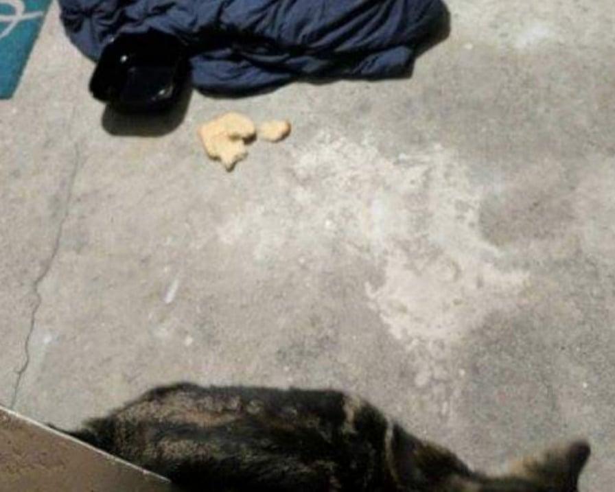 gatto-sulla-veranda