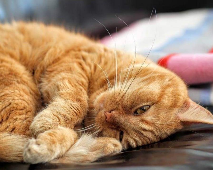 i gatti ci proteggono dalla negatività