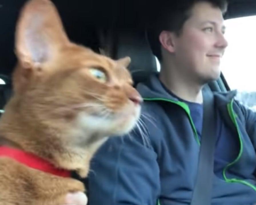 il-gatto-canta-in-macchina
