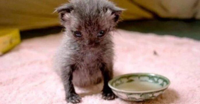gattino-salvo-per-miracolo