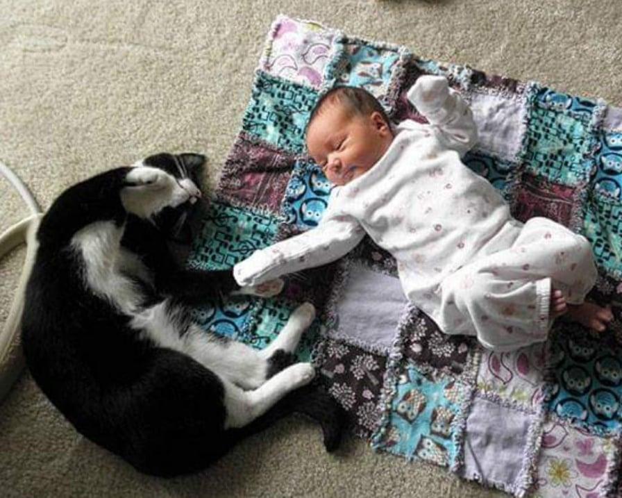 gatto-e-bambino-si-danno-la-mano