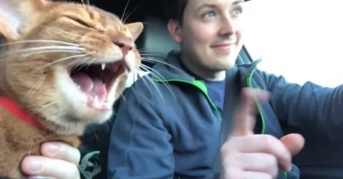 il-gatto-musicale-in-macchina