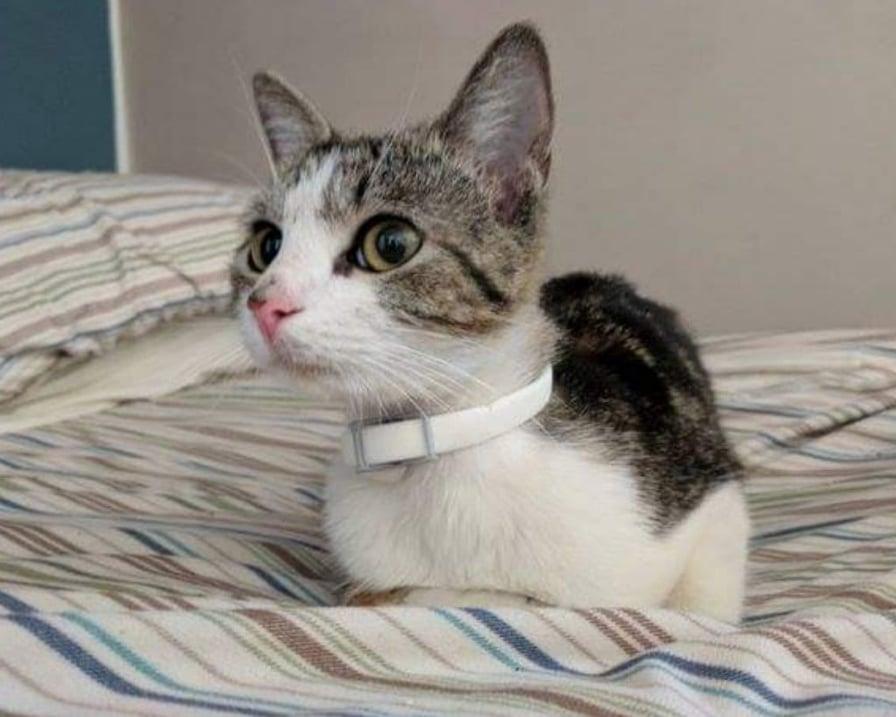 gatto-randagio-trova-casa