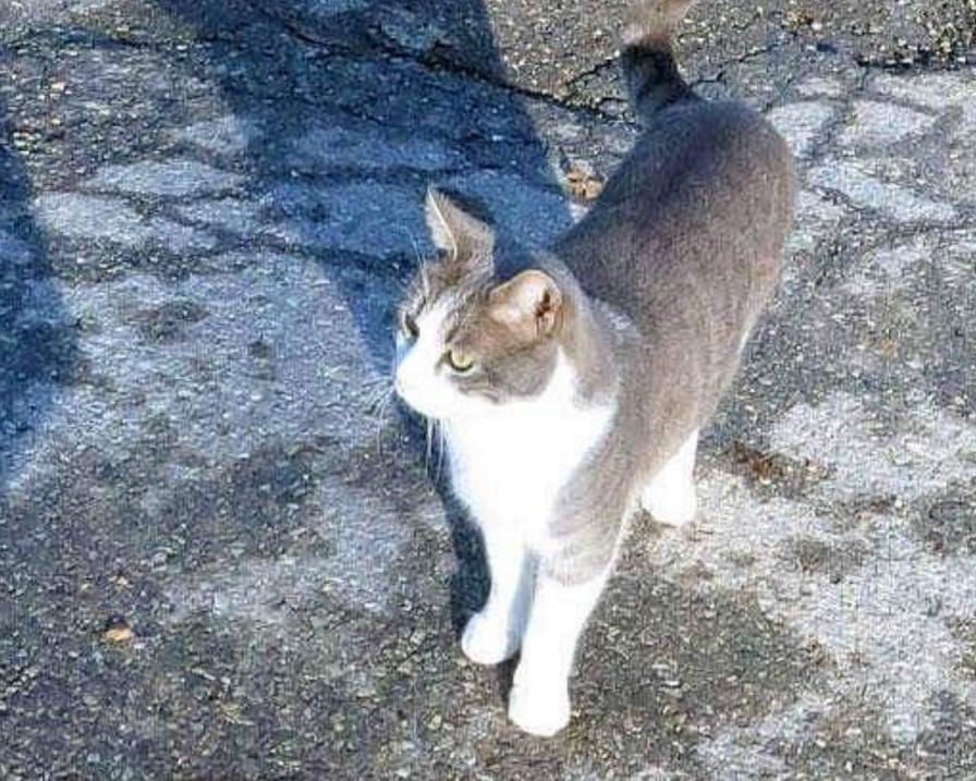 gatto-porta-doni-sulla-tomba-padrone