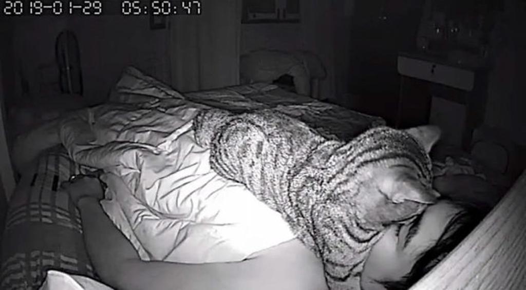 cuscino-umano-per-gatto