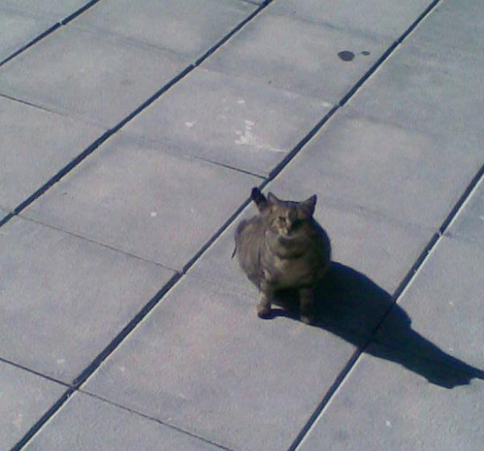 la gatta vuole entrare in casa