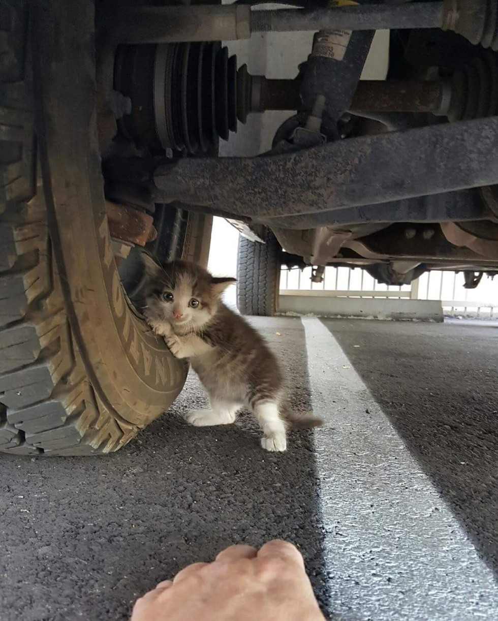 camionista salva gattino