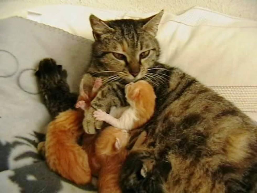 la gatta ha partorito