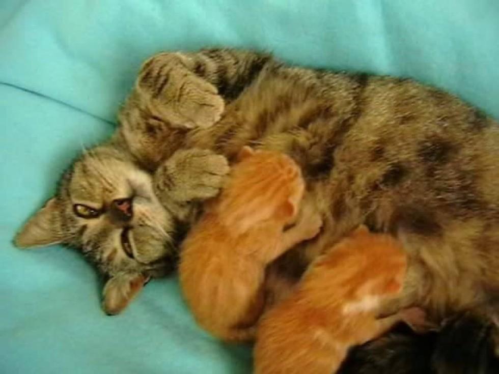 la gatta allatta i suoi cuccioli