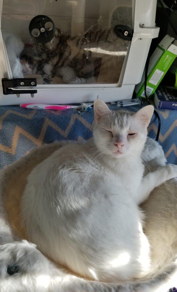 gatto-veglia-gattino-malato