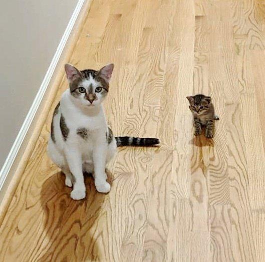 gatto-e-gattino
