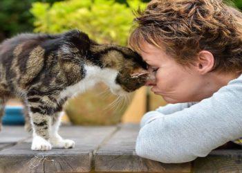 Boo-il-gatto-tornato-a-casa-dopo-13-anni-di-assenza