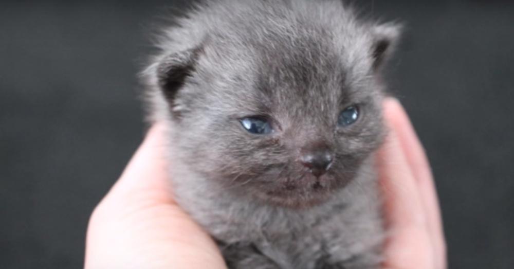 il-gattino-inizia-a-crescere