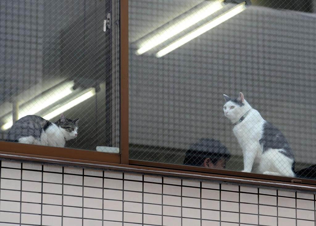gattini in azienda