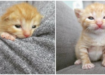 Cinque-gattini-abbandonati-hanno-vinto-la loro-battaglia-vivere
