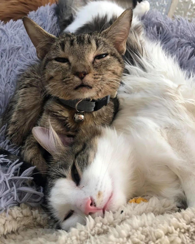Gatta-fa-compagnia-altro-gatto
