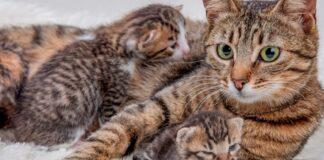 gatta con figli cuccioli