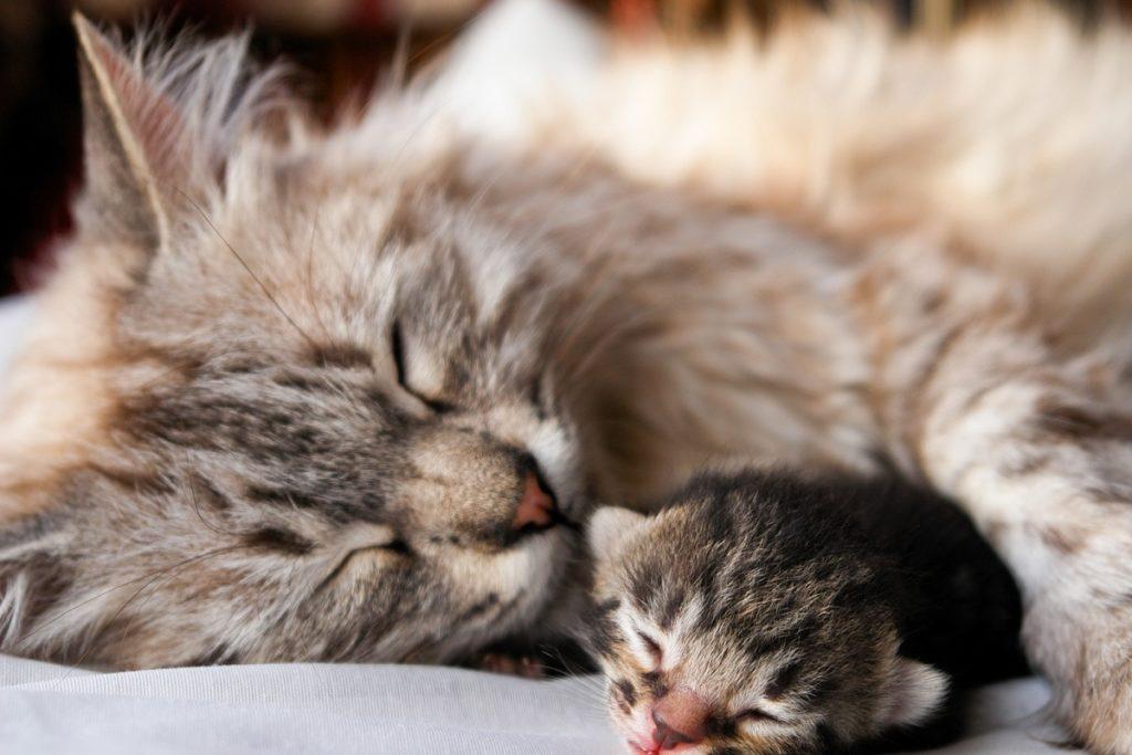 gatta con gattino