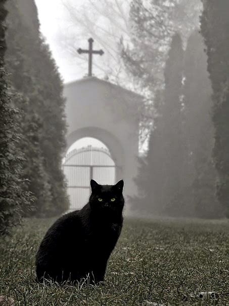 Gatto-nero-nel-giardino